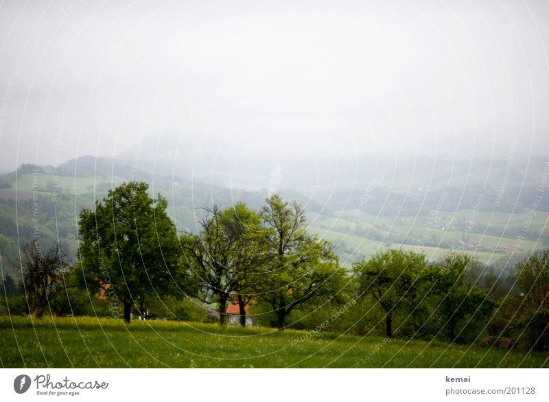 Trüb, aber grün Umwelt Natur Landschaft Pflanze Himmel Wolken Frühling Klima schlechtes Wetter Nebel Baum Blume Gras Grünpflanze Nutzpflanze Wildpflanze