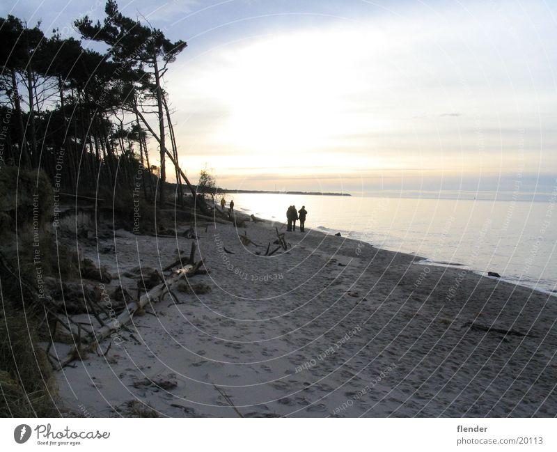 Abend Gegenlicht Strand Baum Darß Meer Ostsee