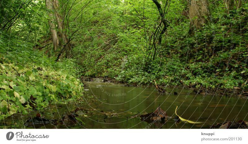 Unten am Fluss II Erholung Ferien & Urlaub & Reisen Ausflug Sommer Umwelt Natur Pflanze Urelemente Wasser Frühling Baum Gras Sträucher Wald Bach braun grün