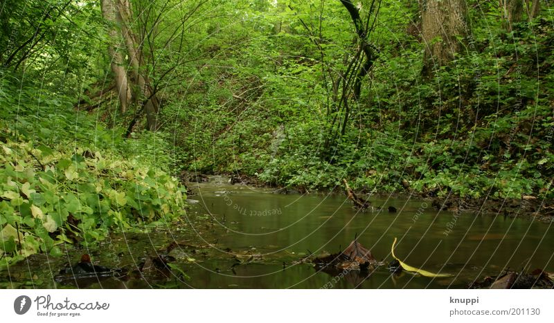 Unten am Fluss II Natur Wasser grün Baum Pflanze Sommer Ferien & Urlaub & Reisen Wald Erholung Umwelt Gras Frühling träumen braun Ausflug Sträucher