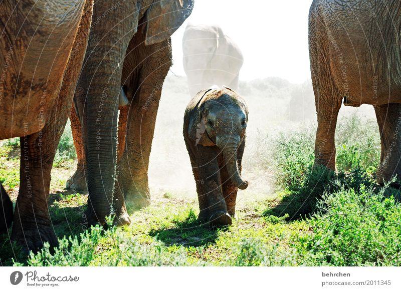 musik | die wildeste trompete der welt Natur Ferien & Urlaub & Reisen Pflanze Tier Ferne Tierjunges Gras außergewöhnlich Freiheit Tourismus Ausflug Wildtier