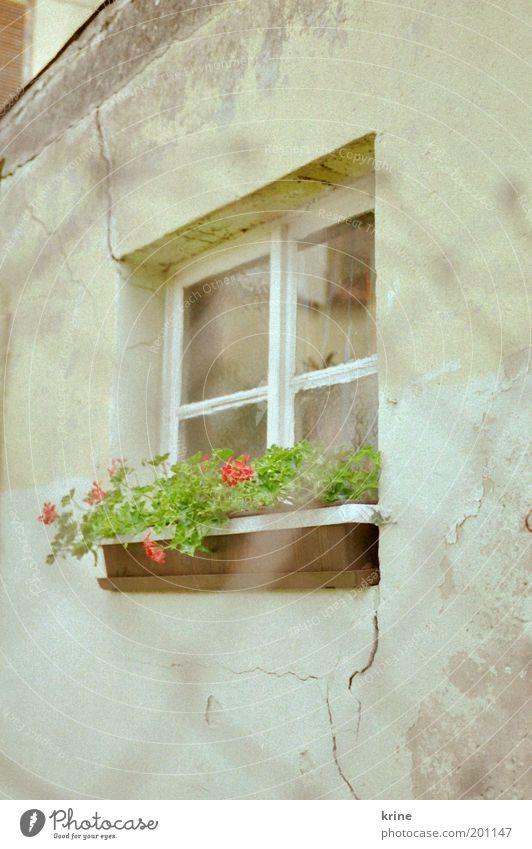 window 2 Fenster trashig ruhig Zaun Pelargonie Blumenkasten Fassade Gitternetz Nostalgie Putz verfallen alt frisch Frühling Sommer retro Hinterhof Gartenhaus