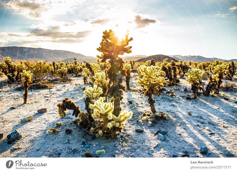 Kaktus Garten Ferien & Urlaub & Reisen Natur Sommer Pflanze blau Landschaft Ferne gelb Umwelt Tourismus Freiheit Ausflug wandern gold Abenteuer USA