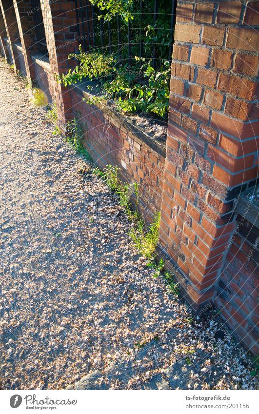 Durchbrüche grün rot Leben Blüte Wege & Pfade Perspektive ästhetisch Wachstum Backstein Duft Zaun Blütenknospen eckig Grünpflanze Ausgrenzung Mauer