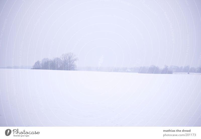 1213 Umwelt Natur Landschaft Himmel Horizont Winter schlechtes Wetter Nebel Eis Frost Schnee Pflanze Baum Wiese Feld dunkel kalt trist Endzeitstimmung Ewigkeit