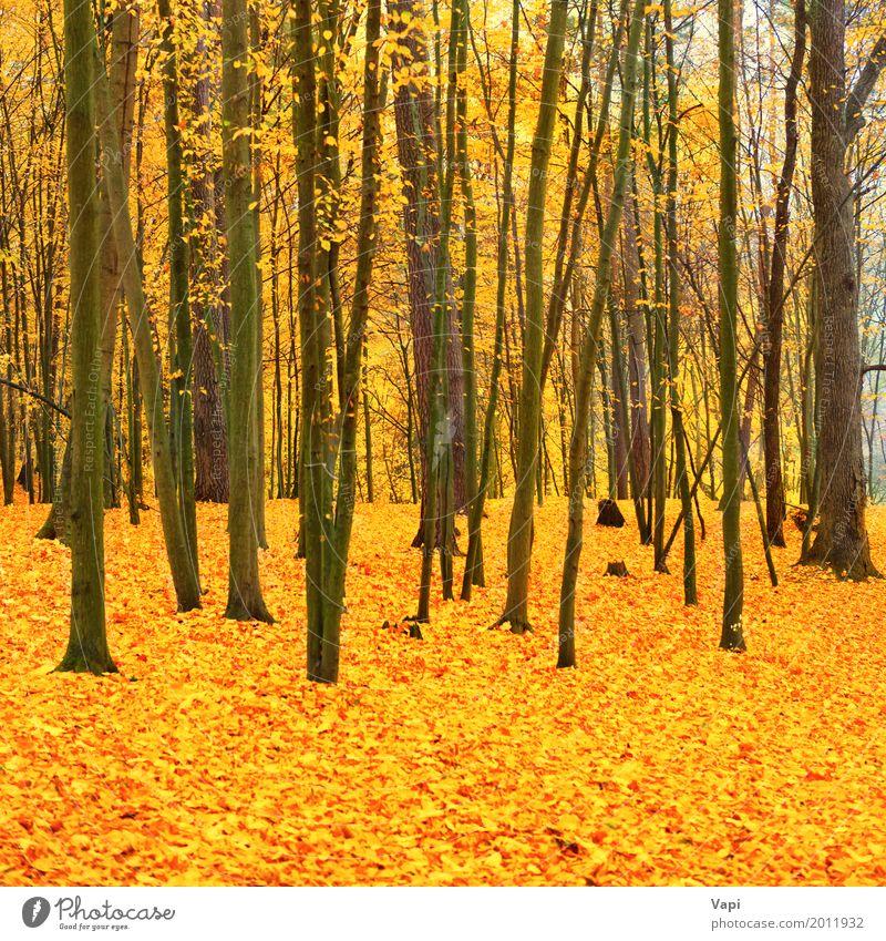 Schöner gefallener Park im Wald Natur Pflanze Farbe grün Baum Landschaft rot Blatt schwarz Umwelt gelb Herbst natürlich braun hell