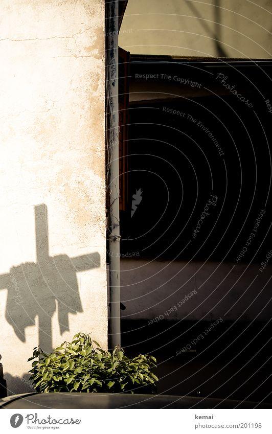 Ein Kreuz Pflanze schwarz Wand Mauer Feste & Feiern Kultur Zeichen Christliches Kreuz Glaube Jesus Christus Christentum Tuch Grünpflanze Katholizismus Auferstehung