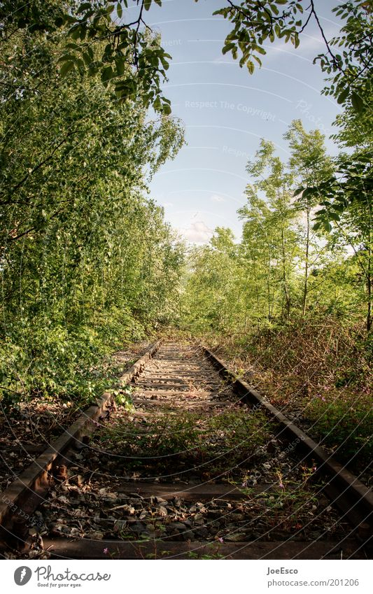 into the wild... Natur schön Baum Pflanze Sommer Ferien & Urlaub & Reisen Einsamkeit Ferne Wald Leben Freiheit Gras Beginn wild Reisefotografie Gleise