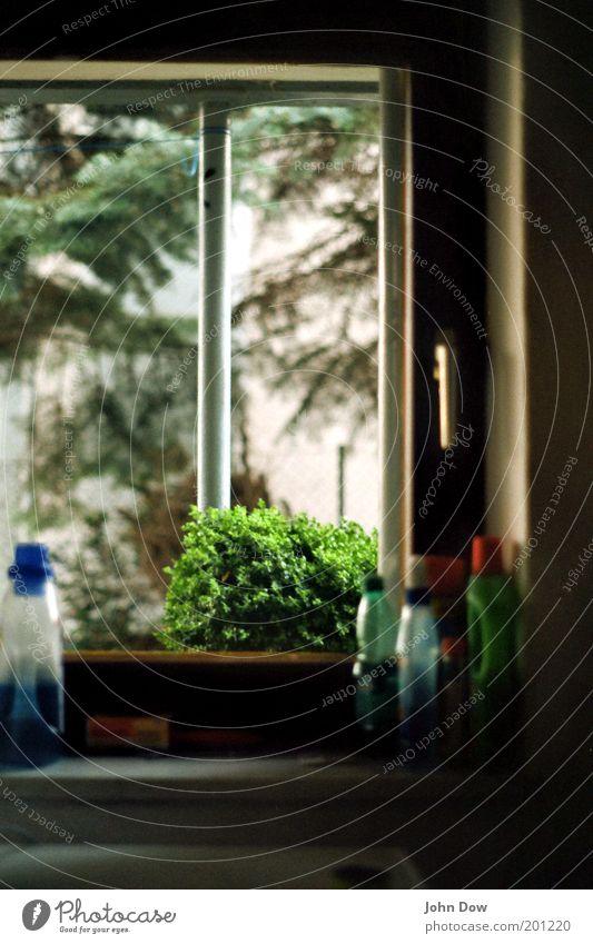 Schöne Aussichten Fenster Wohnung authentisch Häusliches Leben Sträucher Sauberkeit Idylle Schönes Wetter Haushalt Durchblick Alltagsfotografie normal