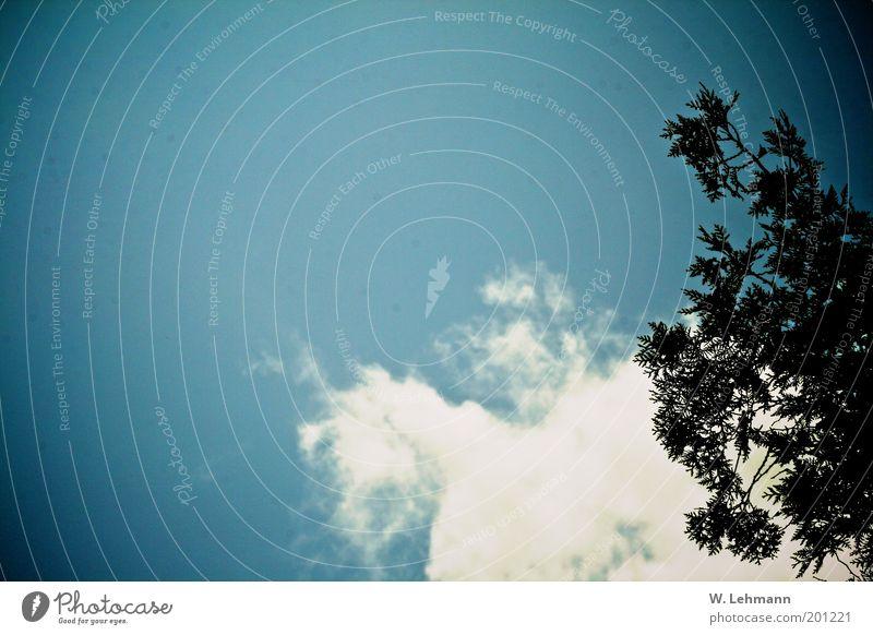 Freisein Himmel Natur blau Pflanze Sommer Wolken Umwelt Stimmung Luft braun authentisch Unendlichkeit Schönes Wetter Originalität Vorfreude Frühlingsgefühle