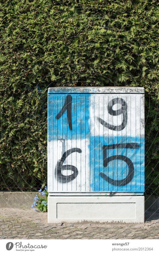 1965 blau Stadt grün weiß Graffiti Energiewirtschaft Telekommunikation Elektrizität Fußball Ziffern & Zahlen Internet eckig Kasten Hecke Magdeburg blau-weiß