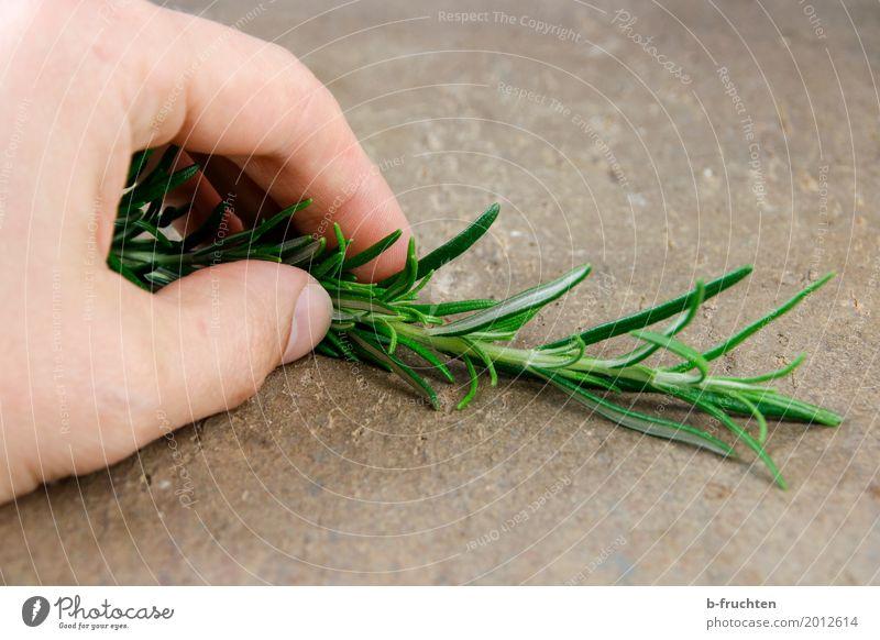 Rosmarinzweig Mann grün Erwachsene Gesundheit Arbeit & Erwerbstätigkeit frisch Finger Kräuter & Gewürze Küche kochen & garen Gastronomie Zweig Bioprodukte