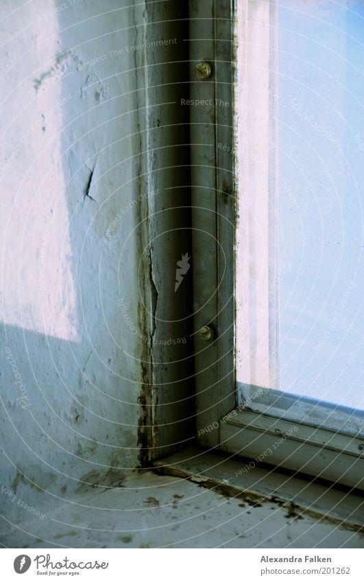 Hautalterung II blau Farbe kalt Fenster dreckig ästhetisch kaputt authentisch Häusliches Leben Riss Schimmelpilze abblättern Schaden Farbfleck
