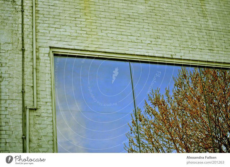 Spieglein, Spieglein Wohnung Traumhaus Hausbau Umwelt Natur Pflanze Herbst Klima Schönes Wetter Baum Reflexion & Spiegelung Himmel Wolken Mauer Wand Leitung