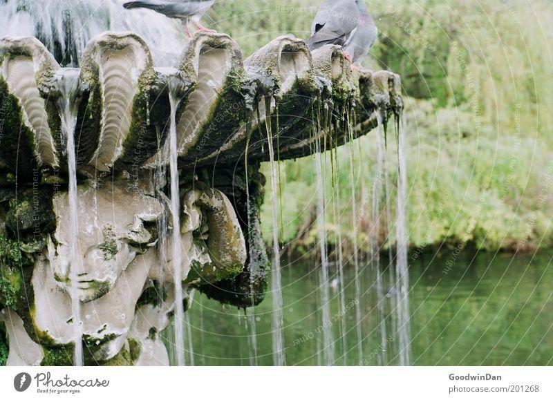 Hyde Park Fountain schön Wasser Erholung außergewöhnlich See Vogel träumen Park frei authentisch Brunnen Taube Springbrunnen