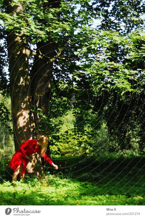 seltene Gattung: die rote Waldläuferin Mensch Natur Jugendliche Baum Blume grün Pflanze rot Sommer ruhig Wald Erholung Herbst Gras Frühling Park