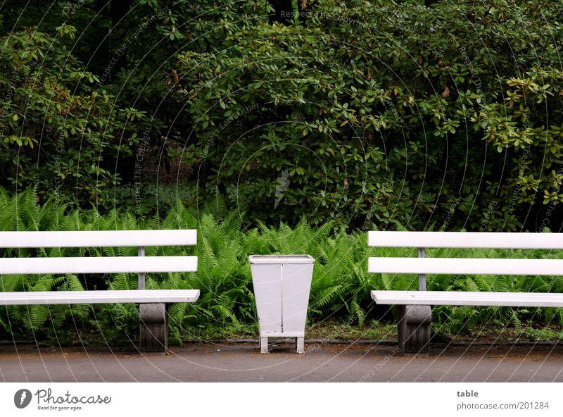 - , - Natur weiß Baum grün Pflanze Einsamkeit dunkel Holz grau Park Stimmung Metall warten Umwelt Ordnung