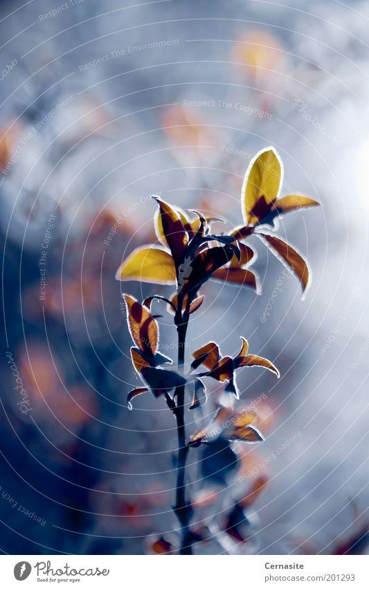 Gegen das Licht Natur Pflanze Sonnenlicht Frühling Baum Blatt Wiese ästhetisch gruselig hoch schön natürlich wild blau mehrfarbig gelb gold Ast Unschärfe