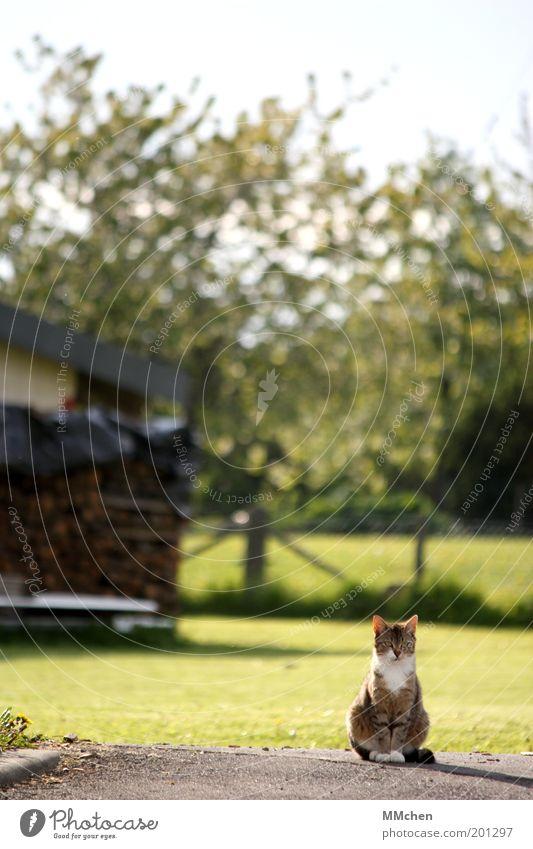 Revier Natur Baum grün ruhig Tier Holz Katze sitzen beobachten Neugier Konzentration entdecken Langeweile Wachsamkeit Erwartung Haustier