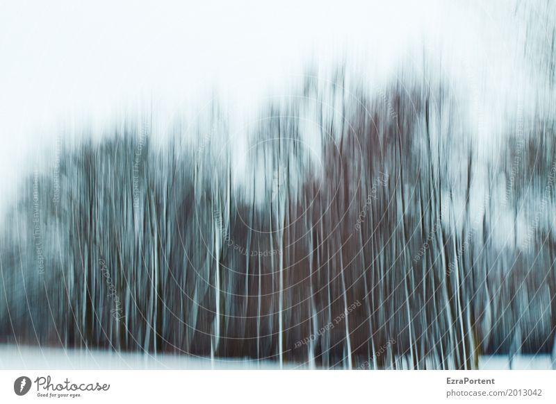       Himmel Natur Farbe weiß Baum Landschaft Winter Wald schwarz Umwelt kalt Hintergrundbild Schnee Holz grau Design
