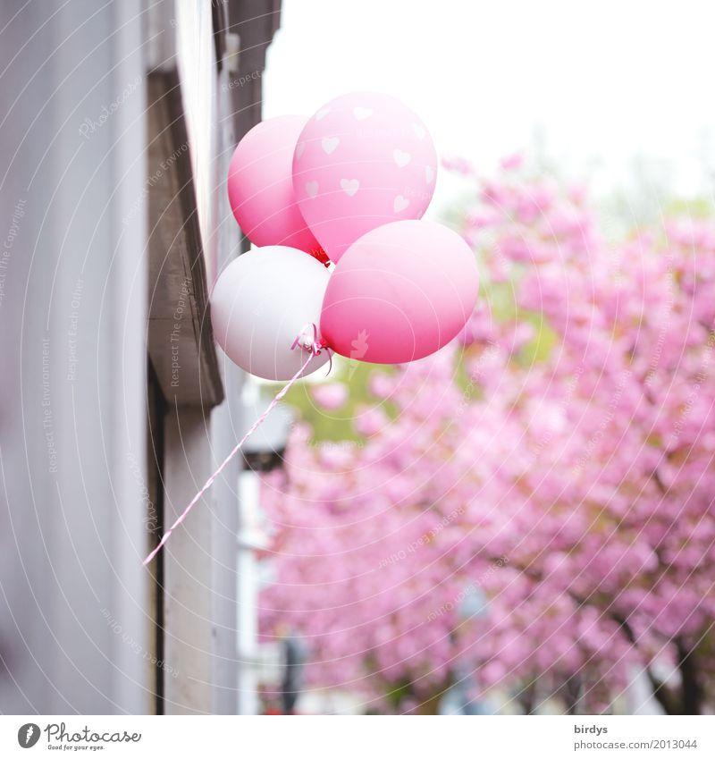 Festlicher Frühling Stadt Farbe schön Baum Freude Blüte Frühling außergewöhnlich Feste & Feiern rosa leuchten ästhetisch Fröhlichkeit Blühend Herz Lebensfreude