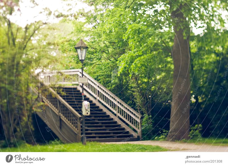 Oh happy Day Natur Baum Pflanze Wege & Pfade Umwelt Park Fußweg genießen Treppengeländer Straßenbeleuchtung Brücke Brückengeländer Laternenpfahl Fußgängerbrücke Fußgängerübergang