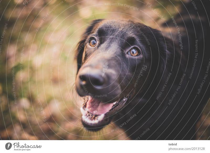 Paula Natur Schönes Wetter Tier Haustier Hund Tiergesicht 1 beobachten hocken leuchten Freundlichkeit Fröhlichkeit Glück kuschlig weich Freude Begeisterung