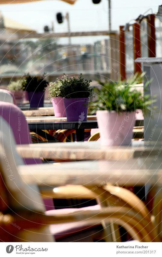 Rosa Strandcafe II Ferien & Urlaub & Reisen Pflanze Sommer Erholung braun rosa Wetter Café Tisch Stuhl violett Sommerurlaub Blumentopf Grünpflanze Gastronomie Möbel