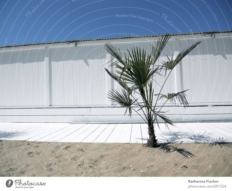 Gestern frisch gestrichen Natur Himmel weiß grün blau Pflanze Sommer Strand Ferien & Urlaub & Reisen ruhig Erholung Holz Sand Luft Umwelt Palme