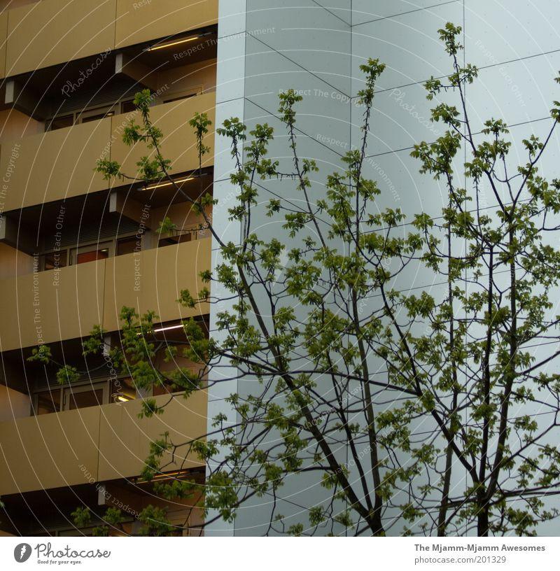 Die goldenen Dresdner weiß Baum grün Stadt Haus Wand Fenster Mauer Architektur Wohnung Tür gold Hochhaus Fassade neu einfach