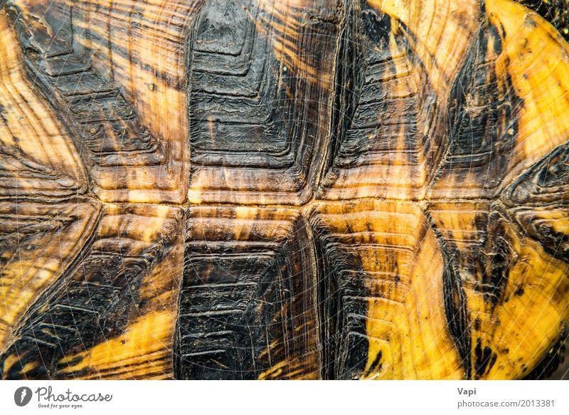 Natur Tier schwarz gelb natürlich braun orange Wildtier Haut Schutz Haustier Tapete Oberfläche antik rau hart