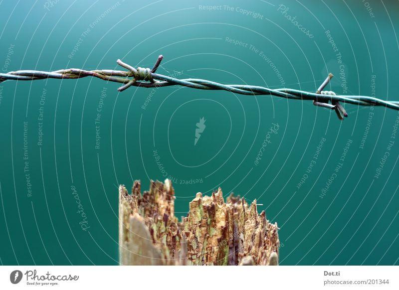Hasendraht grün Holz Metall Sicherheit Spitze Grenze Zaun Barriere Draht schließen Ausgrenzung Stacheldraht Holzpfahl Begrenzung eingezäunt