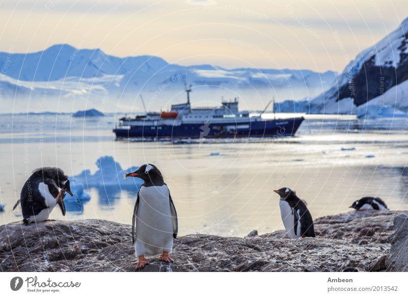 Gentoo-Pinguine, die auf den Felsen und dem Kreuzschiff stehen Himmel Natur Ferien & Urlaub & Reisen Farbe Wasser weiß Landschaft Meer Tier Winter Strand