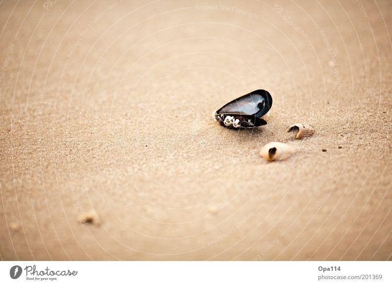 Muschel Natur weiß Meer Sommer Strand Ferien & Urlaub & Reisen schwarz Einsamkeit grau Sand braun Küste Umwelt gold Hoffnung ästhetisch