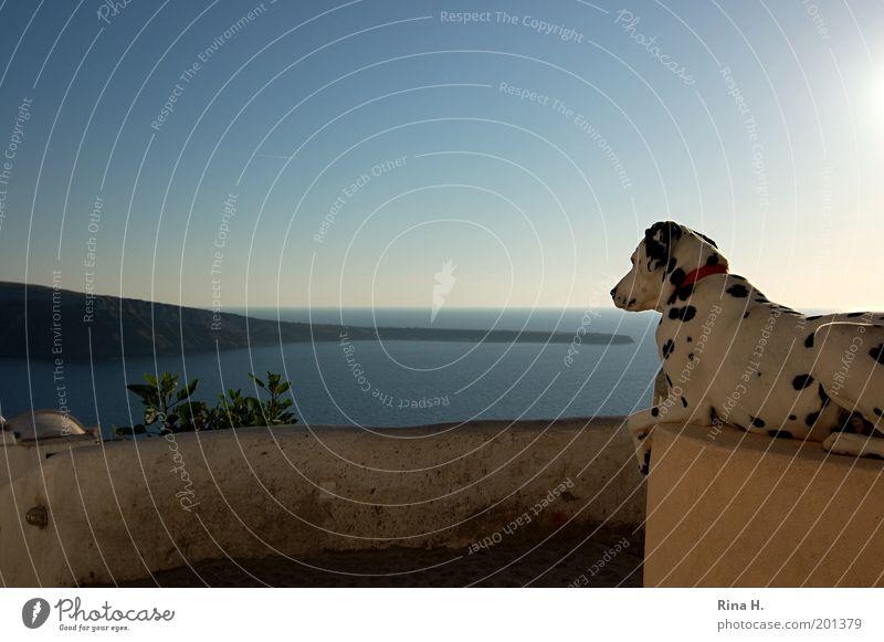 Sphinx von Santorini Ferien & Urlaub & Reisen Tourismus Sommerurlaub Meer Insel Landschaft Himmel Horizont Griechenland Tier Hund 1 beobachten warten ästhetisch
