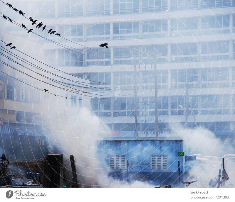 Ganz schön viel Qualm Stadt Haus Ferne dunkel Umwelt Gebäude grau außergewöhnlich Vogel Fassade sitzen Technik & Technologie Platz Tiergruppe bedrohlich Kabel