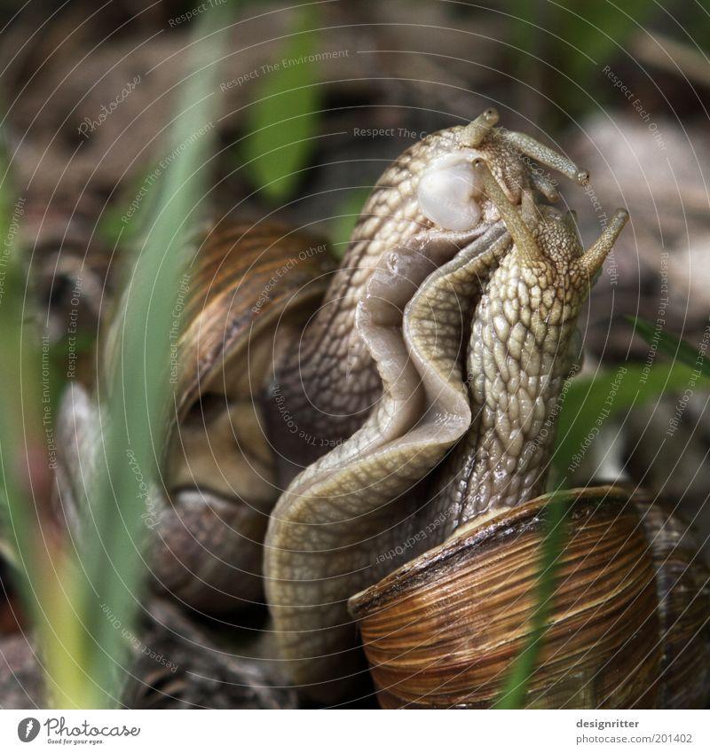 Immer nur das Eine … Natur Zusammensein Tanzen Tierpaar festhalten berühren Küssen genießen Verliebtheit Lust kuschlig Schnecke Ekel Begierde Umarmen Sympathie