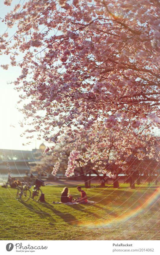 #AS# Einfach Draußen Natur ästhetisch Dresden Blühend Blühende Landschaften Außenaufnahme Frühling Frühlingsgefühle Frühlingstag Frühlingsfarbe Frühlingsfest