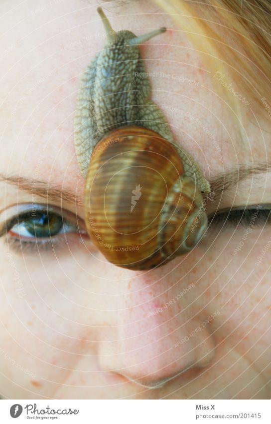 Escargot Junge Frau Jugendliche Gesicht Auge 1 Mensch Tier Wildtier Schnecke schleimig verrückt Ekel bizarr Mutprobe Farbfoto mehrfarbig Außenaufnahme