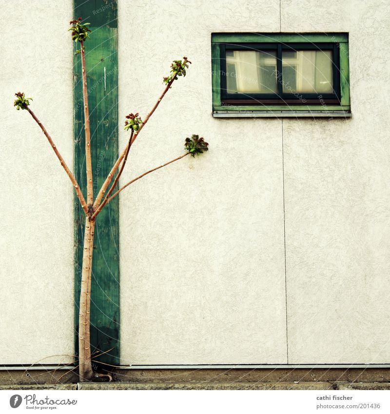 harmonie Baum grün Pflanze Sommer Haus Wand Fenster Frühling Holz Mauer Gebäude braun Architektur Beton Wachstum Kabel