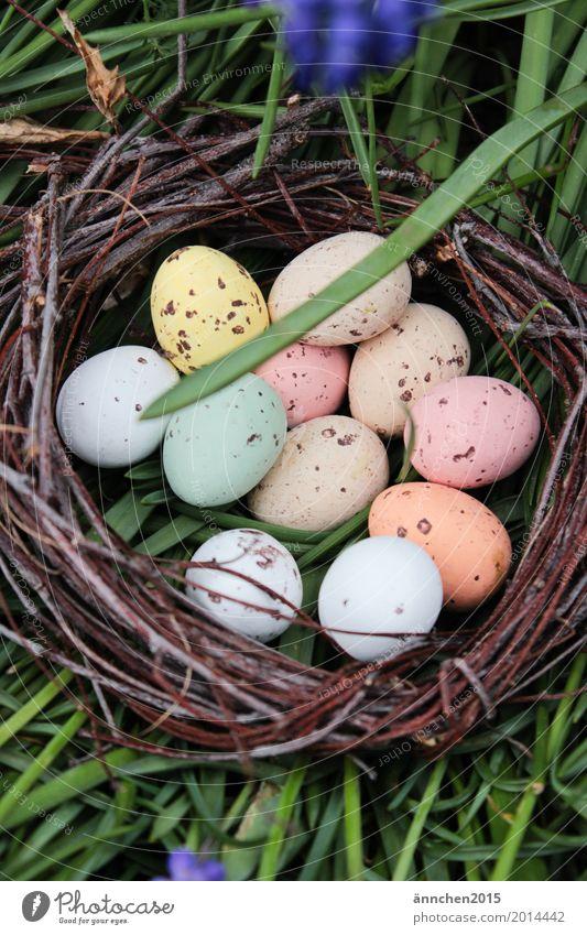 Ostereiersuche Eier Ostern Suche Frühling Nest Gras grün mehrfarbig Punkt Süßwaren Blume Außenaufnahme Natur