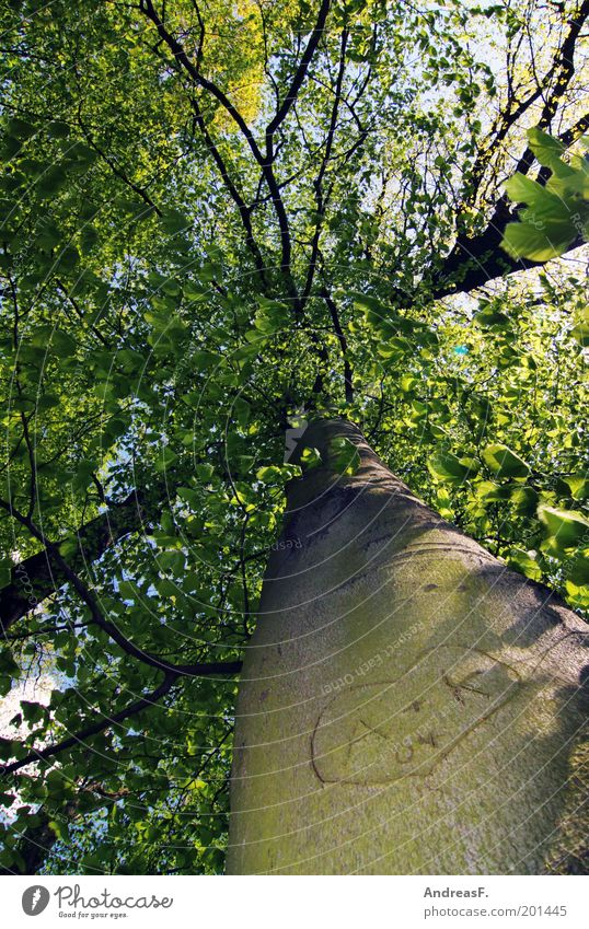 A+K Natur Baum grün Pflanze Liebe Frühling Holz Glück Herz Umwelt Romantik Vertrauen Verliebtheit Treue Blick nach oben Baumrinde