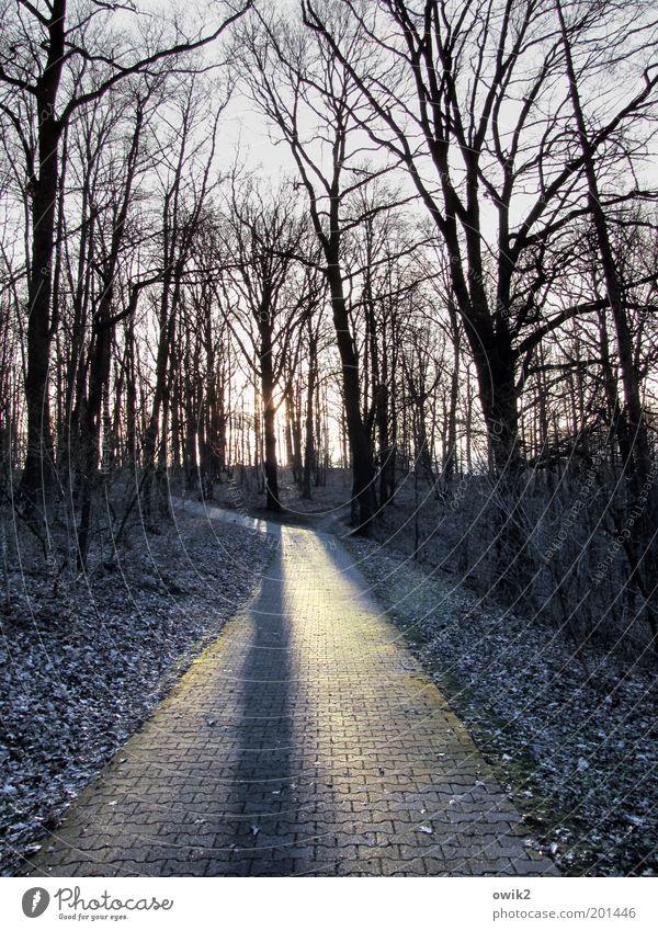 Karge Gegend Natur Baum Pflanze Winter Wald Umwelt Landschaft Holz Wege & Pfade Stein Park Eis Klima leuchten Frost Sträucher
