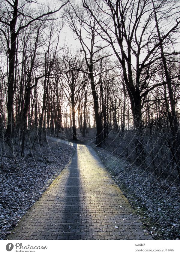 Karge Gegend Umwelt Natur Landschaft Pflanze Wolkenloser Himmel Sonnenlicht Winter Klima Schönes Wetter Eis Frost Baum Sträucher Wildpflanze Zweige u. Äste kahl