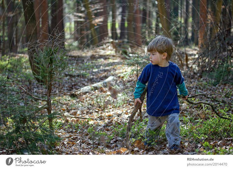 Unterwegs im Wald Ausflug Abenteuer Freiheit Mensch maskulin Kind Kleinkind Junge Kindheit 1 1-3 Jahre Umwelt Natur Frühling Schönes Wetter Baum Holz gehen