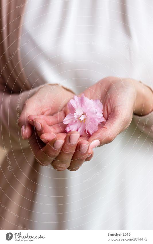 Zart zart hell Blüte Hand Liebe Freundlichkeit harmonisch rosa weiß Natur festhalten Schutz Mensch Erholung Blume Pflanze Jacke Frau Jugendliche Junge Frau
