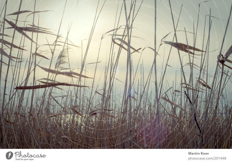 Durchschimmern Wasser schön Pflanze kalt Erholung Gefühle See Wärme Stimmung Wind Umwelt hoch Hoffnung Schutz Vergänglichkeit Neugier