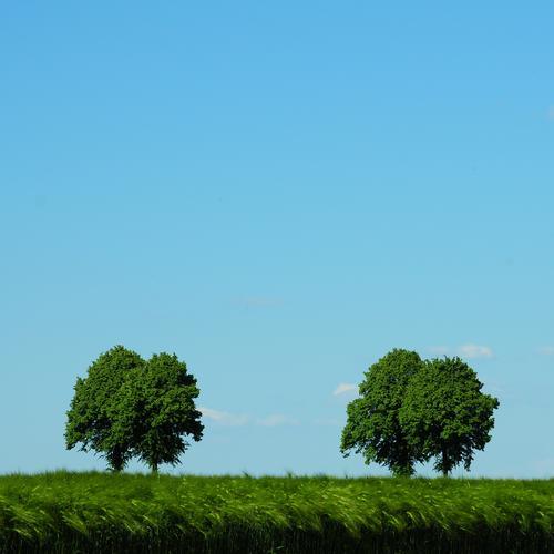 Ein Tag im Mai Natur Himmel Baum grün blau Pflanze Sommer ruhig Frühling Landschaft Feld Umwelt Horizont Wachstum paarweise Klima