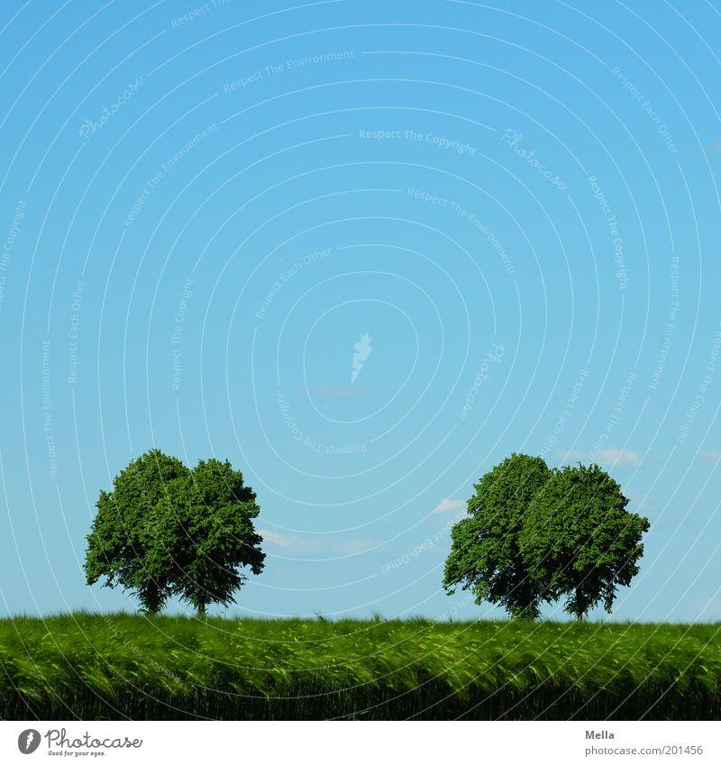 Ein Tag im Mai Umwelt Natur Landschaft Pflanze Himmel Frühling Sommer Klima Baum Getreide Feld Wachstum natürlich blau grün Horizont Idylle ruhig 2 4 paarweise