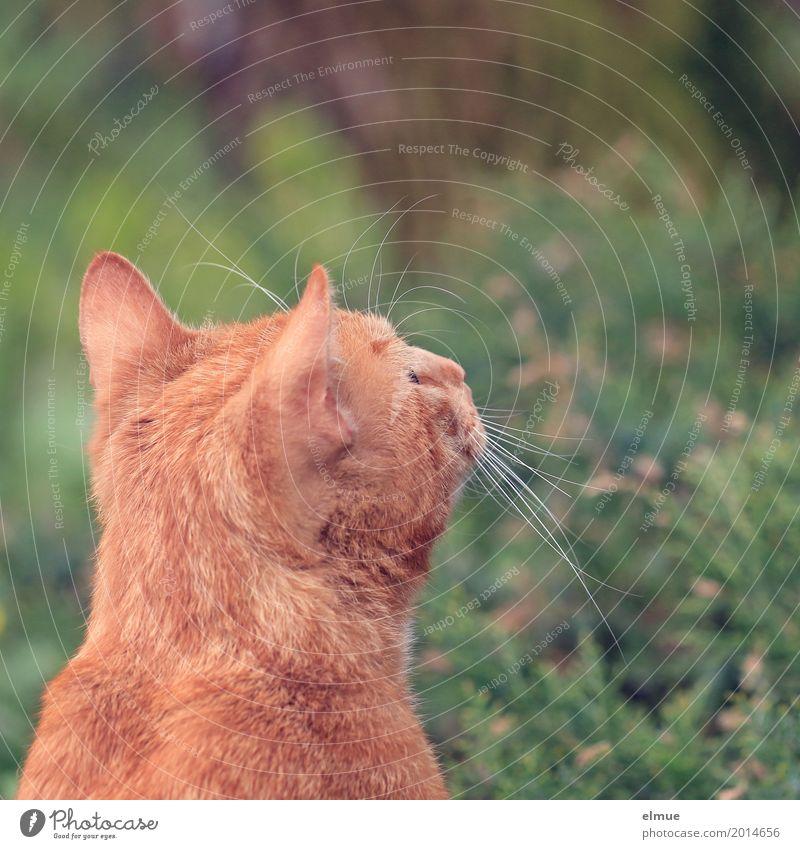 Appetit auf Vogel Katze schön rot ruhig orange träumen beobachten Romantik niedlich planen Neugier Ziel entdecken Sehnsucht Fell Leidenschaft